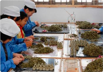 Производство связанного чая